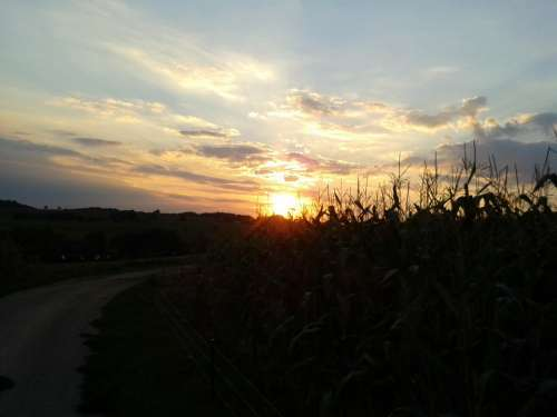 Sunset Away Cornfield Sky Landscapes