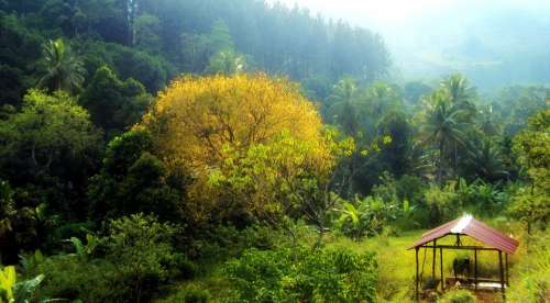 Sunset Pine Trees Yellow Trees Relax Deltota