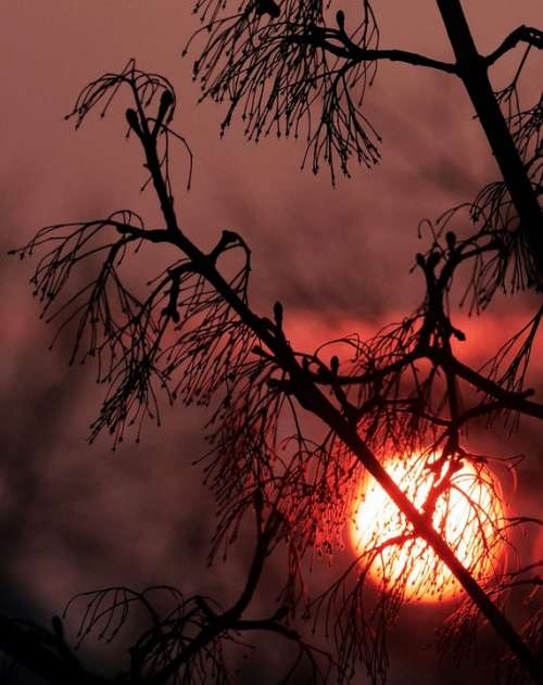 Sunset Nature Abendstimmung Branches Aesthetic