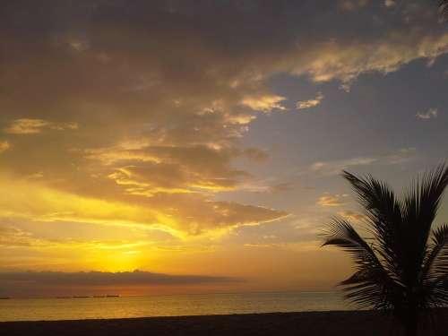 Sunset Palm Tree Sky Cloud Palms Horizon