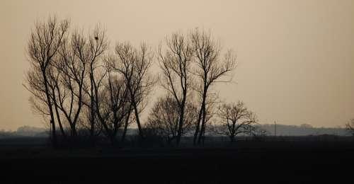 Sunset Color Cloud Wood Clump
