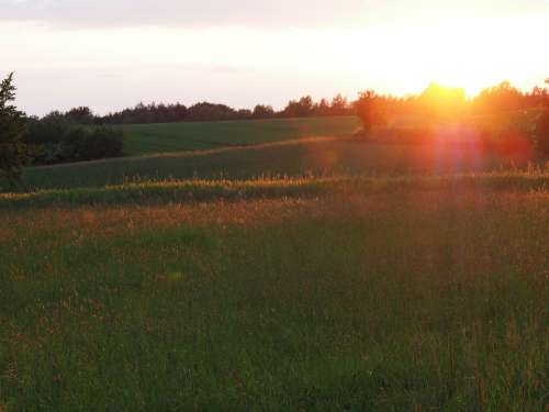 Sunset Grass Landscape Evening Mood Scenery