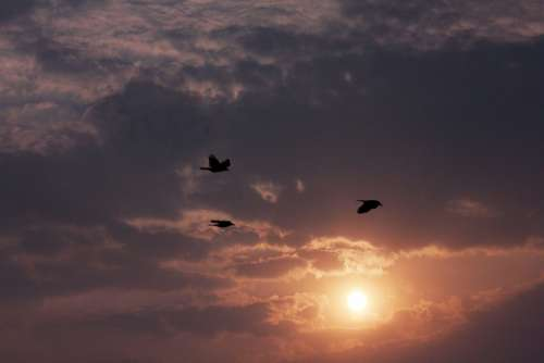 Sunset Beautiful Birds Clouds Dusk Dawn