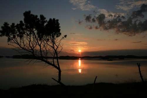 Sunset Tree Sea Silhouette Calm Quiet Norway