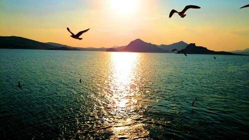 Sunset Gulls Ocean