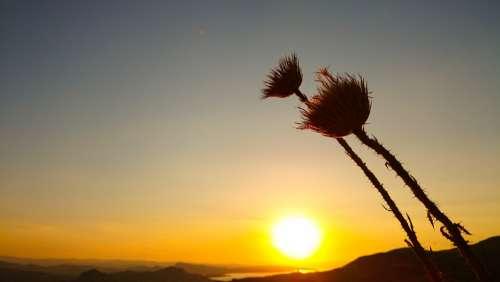 Sunset Solar Dried Flowers