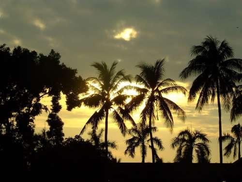 Sunset Coconut Tree Thailand Palms Dusk Tropical