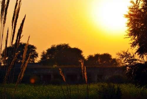 Sunset Yellow Nature Sun Light Sky Tree Sunrise