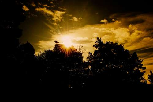 Sunset Tree Trees Sun Nature Evening Silhouette