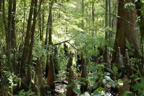 Swamp Marsh Nature Outdoors Landscape Green Wild