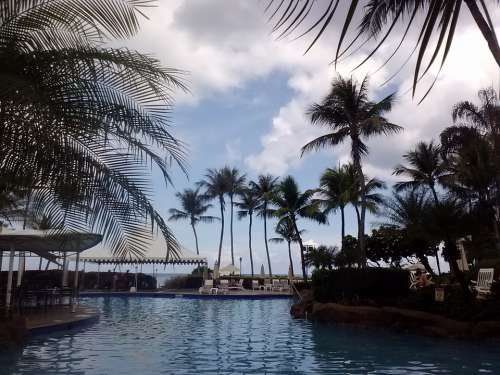 Swimming Pool Pool Water Palms Guam Swim Swimming