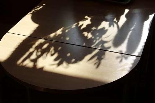 Table Shadow Hispanic Plant