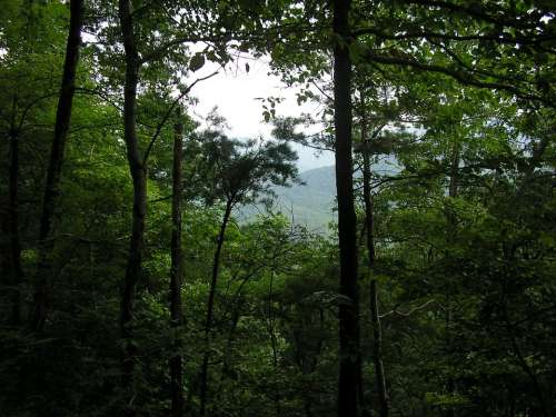 Tennessee Mountains Trees Outside Outdoors Nature