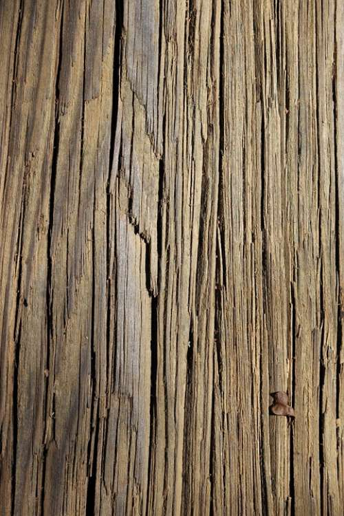 Texture Wood Lines Tan Background Tree Nature