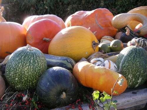 Thanksgiving Autumn Pumpkin Vegetables Colorful