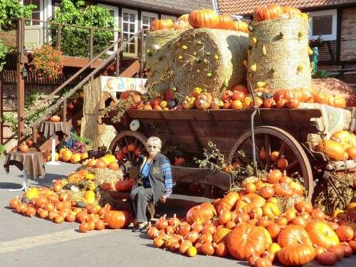 Thanksgiving Autumn Pumpkin October Orange