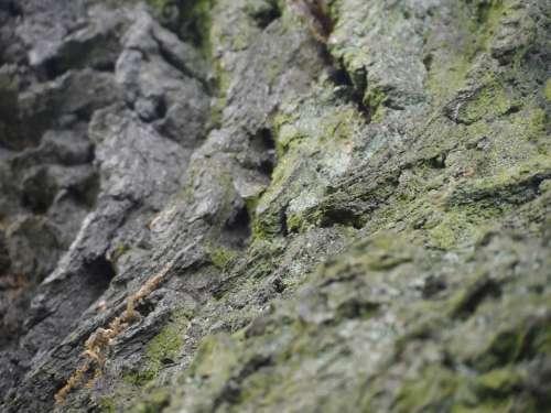 The Bark Tree Moss