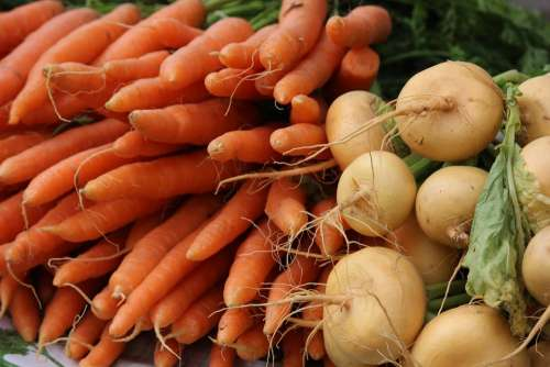 The Carrot Turnip Vegetarian Vegetable