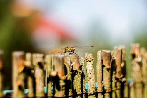 The Fence Wood Ważka