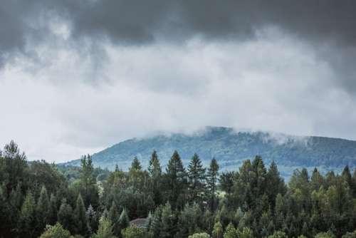 The Fog Para Rain Forest Tree Foliage Leaf