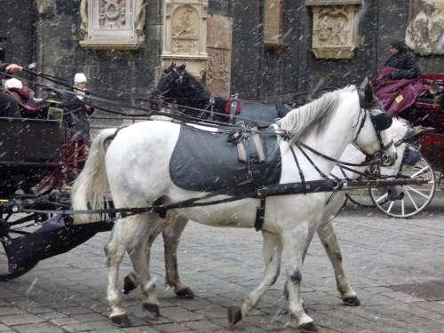 The Horse Winter Snow Cab Animal White Landscape
