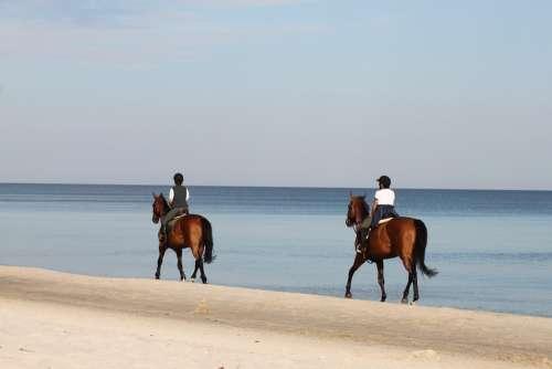 The Horse Horse Animal Jockey