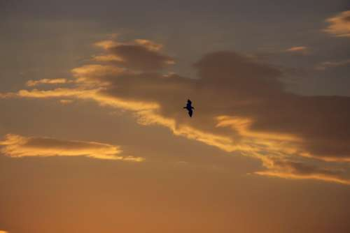 The Seagull Bird Sun Clouds Sky Heaven Sunset