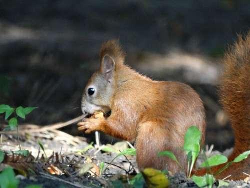 The Squirrel Park Autumn Animal Ruda Pet Charming