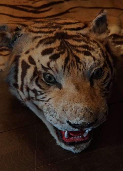 Tiger Skin Pulley Head