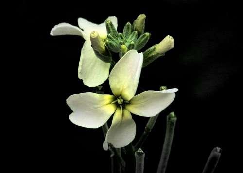 Tiny White Flower Close-Up Nature Plants Garden