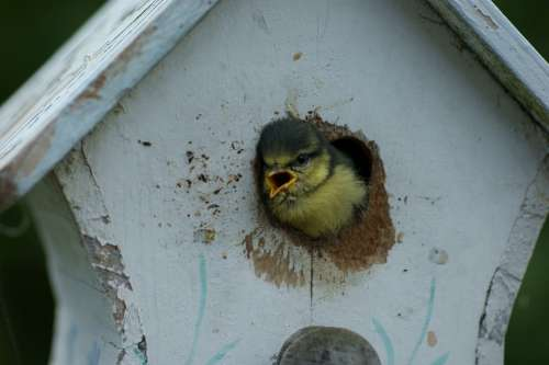 Tit Bird Animals Bird Feeder Feed Bird Seed