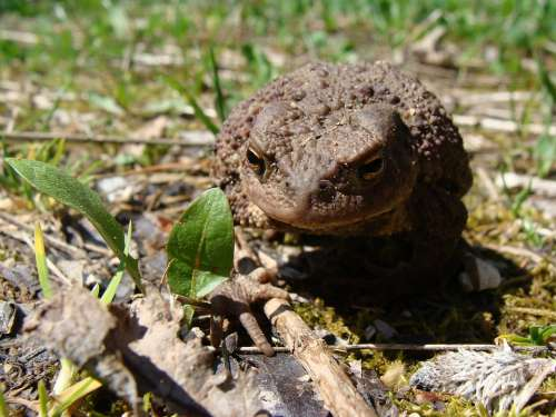 Toad Animal World Amphibian Animals Nature Frogs
