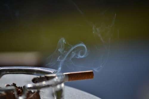 Tobacco Smoke Smoking Cigar Cigarette Butt