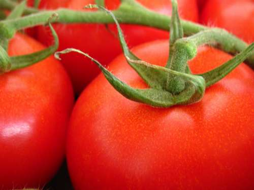 Tomato Garden Nature Plant Red Fruit Vegetables