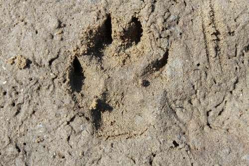 Trace Footprint Dog Track Dog Tracks