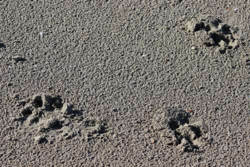 Traces Fingerprints Sand
