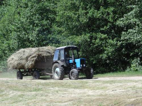 Tractor Hay Forest