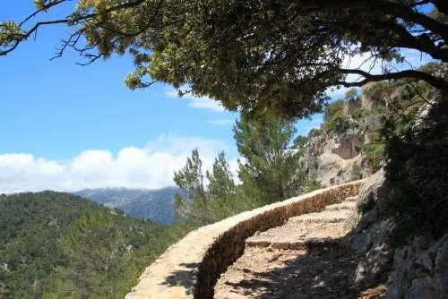 Trail Migratory Path Path Away Hike Nature