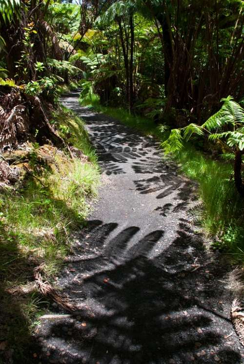 Trail Shadow Hiking Path Fern Hawaii
