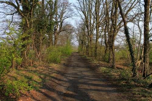 Trail Trees Landscape Hiking