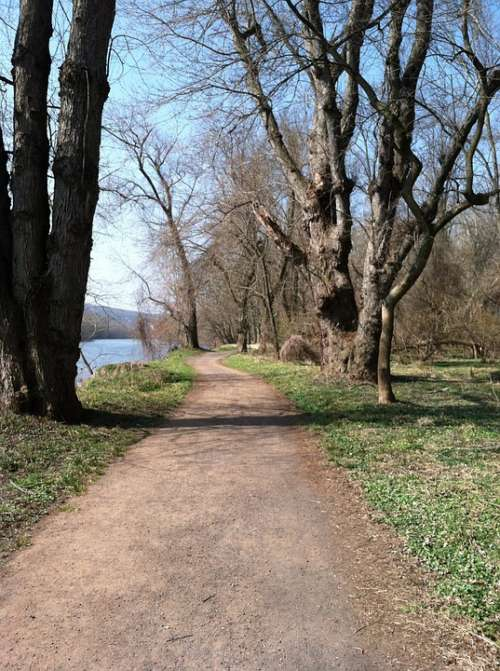 Trail Spring Trees Bare Nature Path Walk