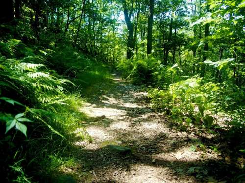 Trail Hiking Hike Path Walkway Nature Outdoors