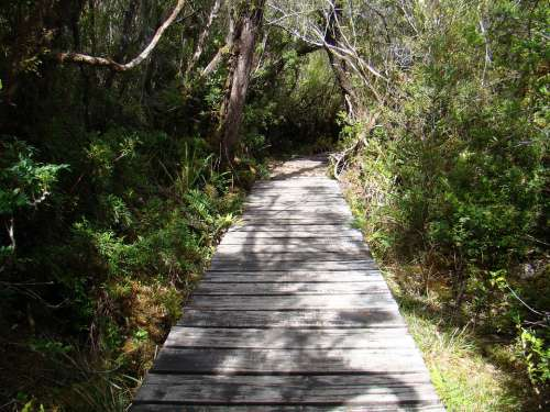 Trail Path Landscape