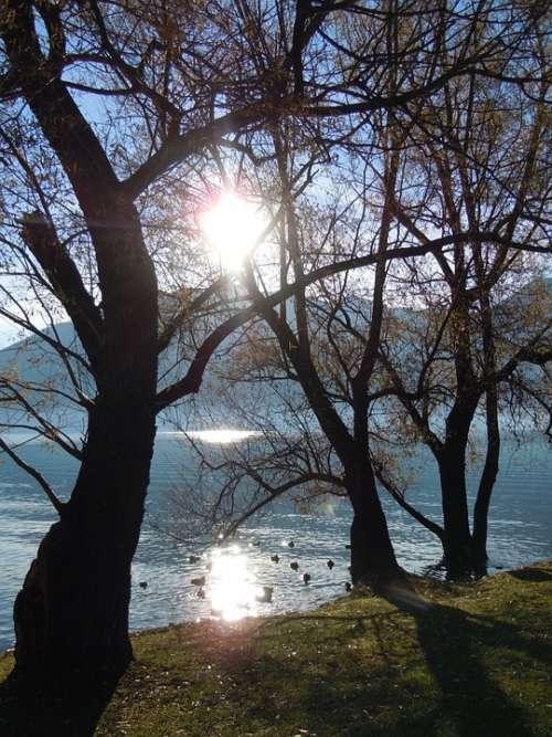 Tree Sun Backlighting Mood Lake