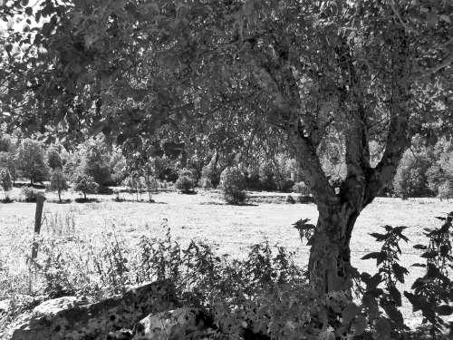 Tree Black And White Vegetation Prairie