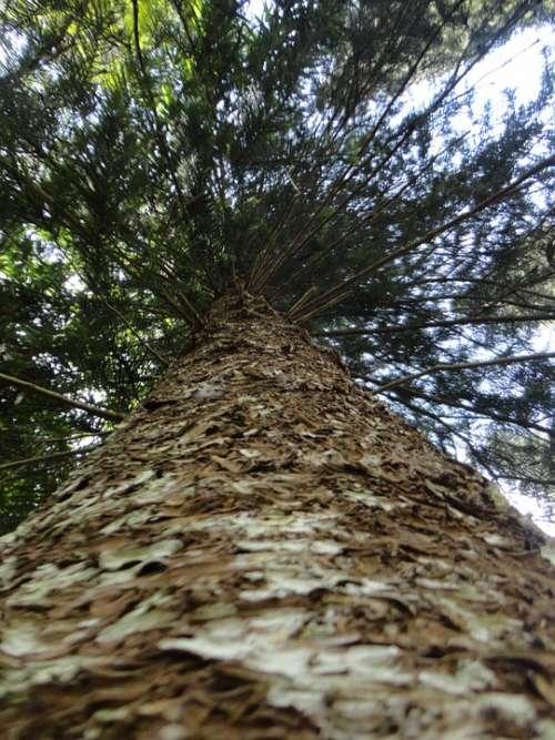 Tree Branch The Leaves Dry Tree Nature Sri Lanka