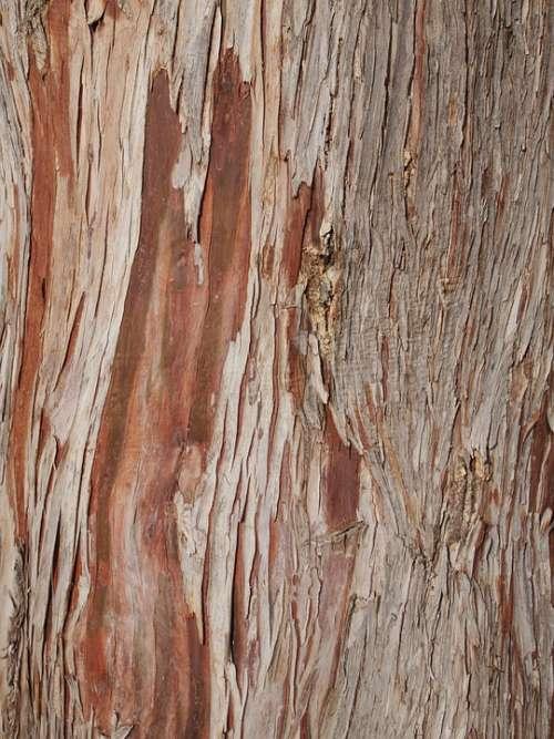 Tree Bark Wood Nature Texture Trunk Cracks