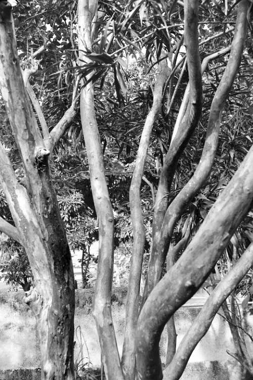 Tree Abstract Back And White Nature Haunted Lonely