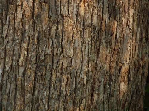 Tree Woods Bark Texture Forest Background
