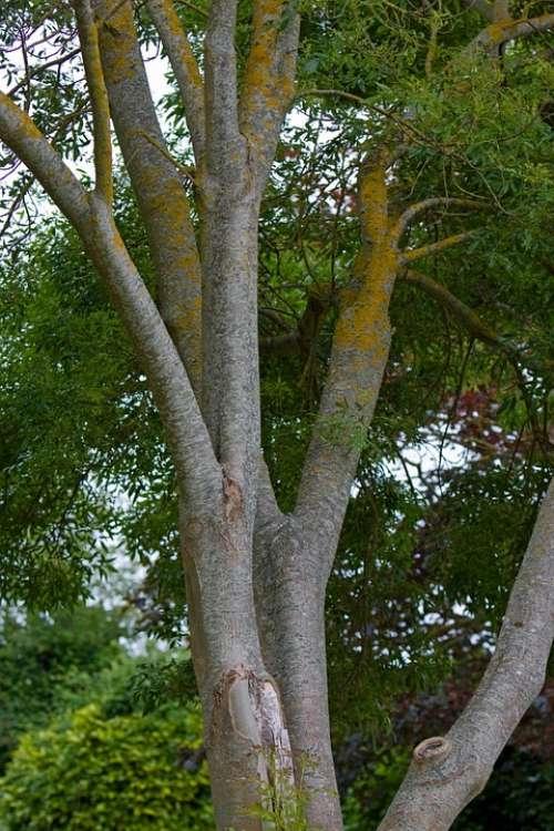 Tree Nature Beautiful Big Bark Texture Leaves